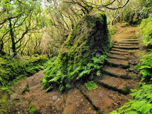 16680911-Anaga-Mountains-and-Forest-Tenerife-Canary-Islands-Spain-Stock-Photo